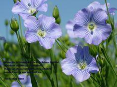 """""""Wenn die Achtsamkeit etwas Schönes berührt, offenbart sie dessen Schönheit. Wenn sie etwas Schmerzvolles berührt, wandelt sie es um und heilt es."""" (Thich Nhat Hanh) Achtsam auf seine eigenen Gefühle und Empfindungen zu hören, hineinzuspüren und wahrzunehmen, unterstützt uns sehr bei unseren tagtäglichen Entscheidungen... :-)"""