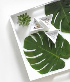 DIY Resin Tray:  Encapsulate anything flat-ish -beach photos, shells, postcards, plam leaves and more! Click here: http://www.completely-coastal.com/2017/04/coastal-resin-tray-diy-ideas.html