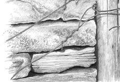 "Detail from Mark Dean's original ""Peregrine"", also available as a print. #birdart #peregrine #pencilsketch #birdartist"