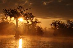LAKE MARTIN LOUISIANA , NEAR BREAUX BRIDGE LOUISIANA , SUNRISE