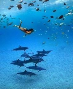 het lijkt mij heel gaaf om een keer met dolfijnen te zwemmen. het ziet er heel mooi uit