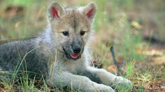 animals baby nature hd wallpapers download