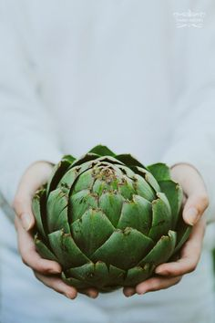 Heirloom Globe Artichoke from Ocean Mist Farms, Castroville CA | Tammy Hughes