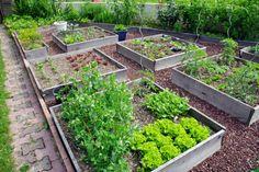 21 Ideen zur Gestaltung des Gemüse- und Kräutergartens