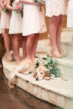 54 Photos of Dogs at Weddings That Are Almost Too Cute for Words. Just look at this gold retriever!