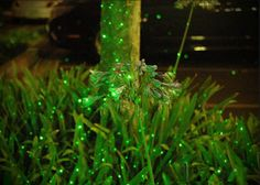 Earth Friendly Lighting by New York Plantings Irrigation and Landscape Lighting.  Contact:646-434-8049