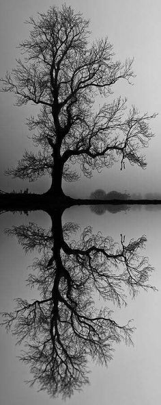 Tree black and white photography beautiful 26 trendy Ideas Beautiful World, Beautiful Images, Trees Beautiful, Landscape Photography, Nature Photography, Landscape Pics, Motion Photography, Reflection Photography, Abstract Landscape