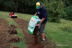 Where to Plant Blueberry Bushes and Preparing the Soil