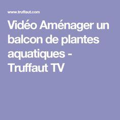 Vidéo Aménager un balcon de plantes aquatiques - Truffaut TV