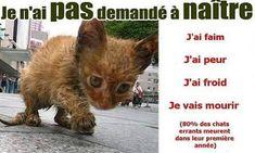 Pétition : La mise en place d'une campagne de stérilisation pour les chats errants