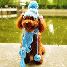 Knit Hat and Scarf – SpoiledDogDesigns.com - Palm Springs, CA - Designer Dog Clothing