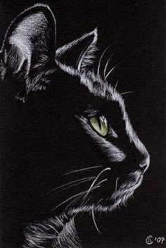 Black CAT Sunshine 4