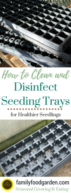 This time of the year I head to wherever the seeding trays are stored and brave the spiders. I love sowing seeds but can't say I'm thrilled every year to clean and disinfect seeding trays and pots. I made the mistake my first couple of years gardening not to disinfect and it's a big mistake as any