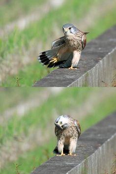 鳥の顔が可愛い