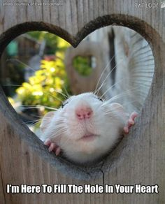 So Cute!! <3 I have mice but rats and mice are some of my favorite animals!                                                                                                                                                      More