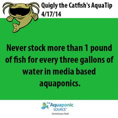 Never stock more than 1 pound of fish for every three gallons of water.in media based aquaponics.