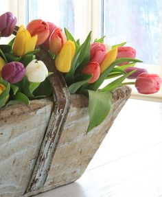 One can never have too many tulips