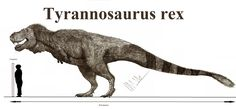 Tyrannosaurus rex compared to the upper size limit of Dakotaraptor steini Dinosaur Drawing, Dinosaur Art, Dinosaur Crafts, Prehistoric World, Prehistoric Creatures, Dinosaur Pictures, Chibi, Extinct Animals, Tyrannosaurus Rex