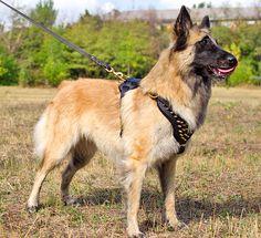 Практичный поводок для тренировки собак - L3 -> 1379.02 руб.