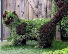 cat topiary...thinking this would be a fun way to grow herbs or succulents...