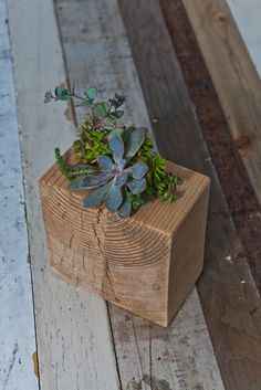 wood block with succulents @Kate Mazur Prevatt  wouldn't this be cool to do with the wooden blocks?