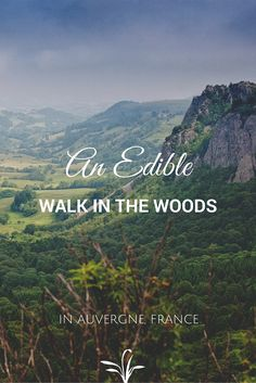 We were invited on an edible walk in #Auvergne, #France, with an expert forager, to discover nature's bounty right beneath our feet.