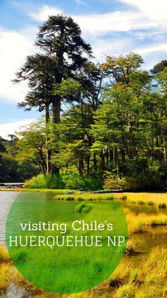 A full guide to visiting Chile's Huerquehue National Park