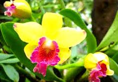 Image result for orchid plants seen in kerala names
