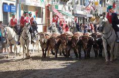 Running Of The Bulls, Lisbon, Scarlet, Festivals, Camel, Portugal, October, Costume, Vest Coat