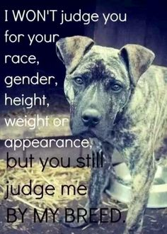 Pit Bulls get a bad wrap.... they only act as their owner trains them to act. Have a heart & love a Pit Bull