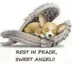Rest in peace sweet angel