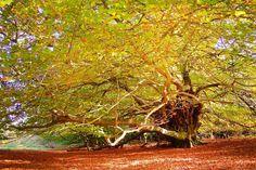Mystic-tree-Effingham-Forest-Surrey-England.jpg 800×535 pixels