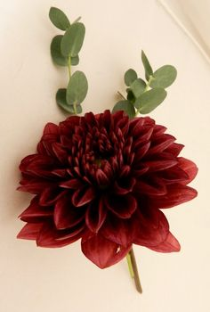 A blog to go to for wedding flower inspiration, design, creation and advice
