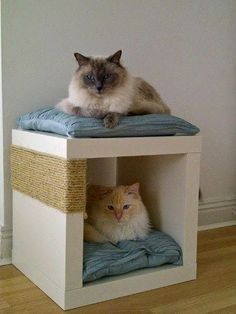 Secure sisal rope around a cube storage /  shelving unit to create a scratch post and cat bed in one.