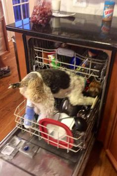 Dishwasher terrier (I can lick those dishes clean! ...No soap needed)