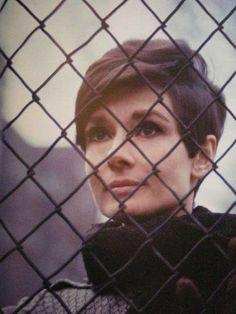 Audrey-Hepburn-Short-Hair-Pixie.jpg (500×667)