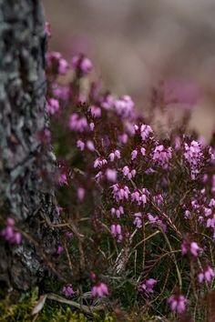 blooming flowers elk grove village
