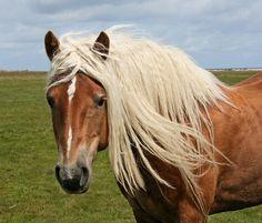 Beautiful blond hair!, via Flickr.