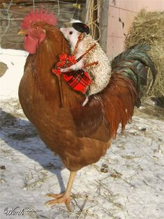 hedgehog riding rooster.. with tiny tam o' shanter and bagpipe.