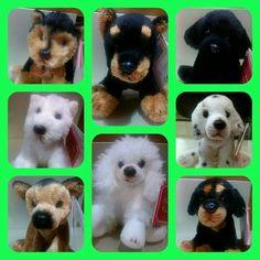 Hoy han llegado unos perritos para adoptar... quién se anima?  #MediaLunita
