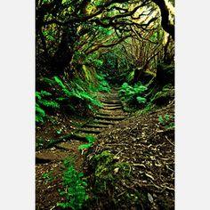 """Melanie Ann Matthews photo - """"Forest Secrets"""""""