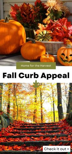 It's time to start thinking about creating fall curb appeal to celebrate harvest season. Whether you're looking to spruce up the place for prospective buyers, holiday guests, or simply to ensuring your property is well-kept. Read on to learn more about building curb appeal during the autumn months. Fall Container Plants, Fall Containers, Planting Pumpkin Seeds, Natural Fall Decor, Potted Mums, Front Porch Plants, Fall Vegetables, Organic Lifestyle, Harvest Decorations