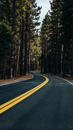 Road, yellow marks, trees, forest, 2160x3840 wallpaper