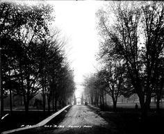 bellwoods park toronto. This photo must have been taken from inside the park, looking out towards Straughan.