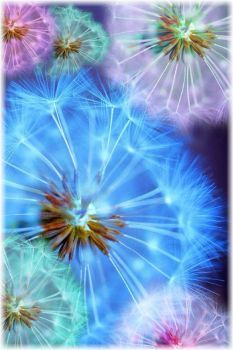 16 Ideas for flowers background wallpapers fractal art Dandelion Wish, Dandelion Art, Dandelion Seeds, Fractal Art, Belle Photo, Pretty Pictures, Beautiful Flowers, Art Photography, Photography Flowers