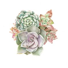 Succulent Watercolor Print - Pastel Assortment by HeartwoodMarket on Etsy https://www.etsy.com/listing/267408665/succulent-watercolor-print-pastel