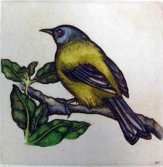 Mary Taylor was born in Devonport, Auckland in She was educated at Auckland University, Teachers College and later, Massey University. She was formerly a teacher and has worked as a professional artist since Teachers College, Mary, Art Prints, Auckland, Gallery, Artist, Painting, Birds, Animals