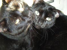 Black cat love.  Jack and Leila.