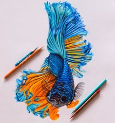Color Pencil Drawing Tutorial Betta Fish finished and finally the orange highlights start to make sense! I keep forgetting to say that there are Fish fin and scale… - Pencil Drawing Pictures, Pencil Drawing Tutorials, Pictures To Draw, Pencil Drawings, Drawing Ideas, Fish Drawings, Realistic Drawings, Colorful Drawings, Art Drawings