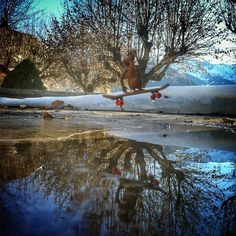 """@et_life's photo: """"I love #puddles cause i can see my Style!!"""""""